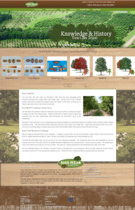 Bass Pecan Trees, Hybrid Oak Trees